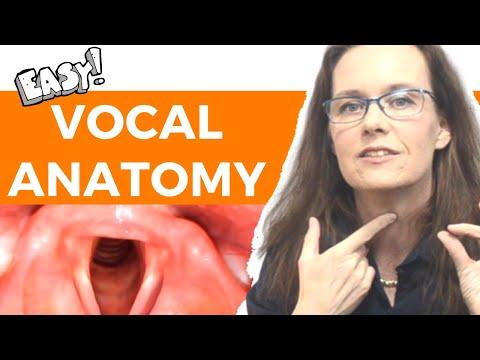 Vocal Anatomy For Singers: Laryngeal Anatomy