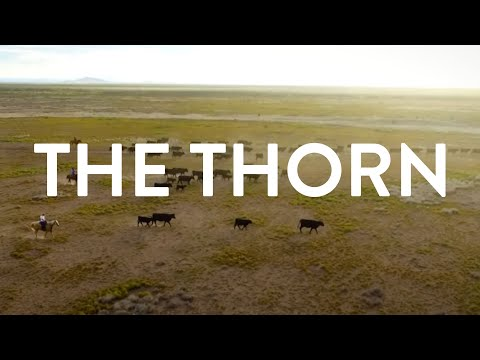 The Thorn - A Documentary on New Mexico Cattle Ranching
