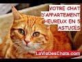 Votre 🐱 chat d'appartement heureux ? Le test en 5 astuces