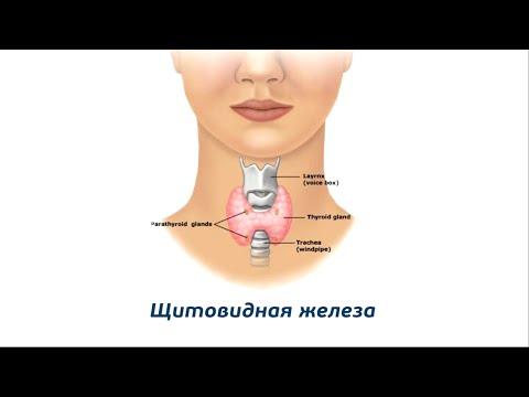 эндокринолог в
