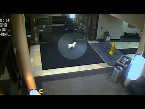 Family dog goes on mission to find owner ... in Cedar Rapids hospital