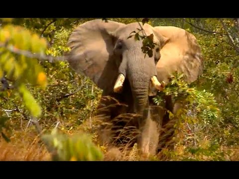 Magnum TV S4:E12- Elephants in the Jesse