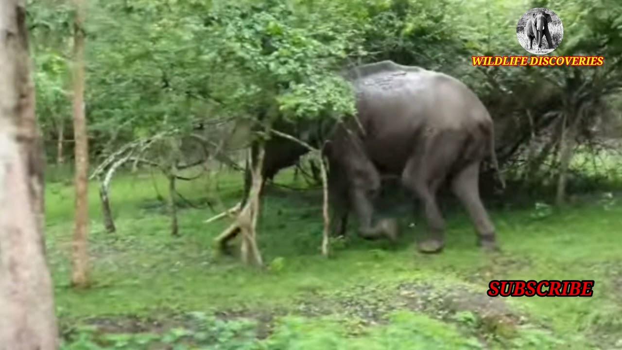 Elephant chases the Car upto 1KM || ஒரு கிலோ மீட்டர் தொலைவுக்கு விடாமல் துரத்தி வந்த யானை