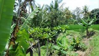 Land for sale in Ubud Centre with rice fields view - TJUB185