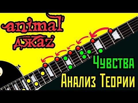 Анимал джаз - Чувства - разбор и анализ теории на гитаре