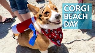 World's Largest Corgi Beach Day: 1,000+ Corgis! - Life After College: Ep. 429