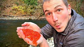 Eating RAW SALMON EGGS By River!!! | Coho Fishing | 4K