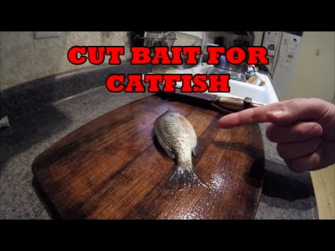 Cut Bait For Catfish - HOW TO