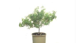 [DIY Basil tree] 바질트리 키우기 | 쑥쑥…