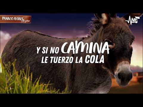Marco Flores Y La Jerez - Burra Orejona (Video Letra Oficial)