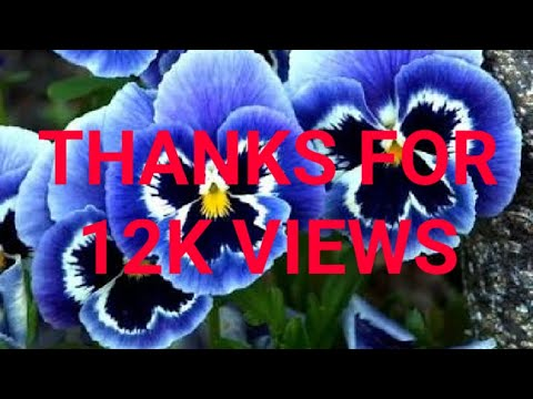 best winter season flowers with name youtube. Black Bedroom Furniture Sets. Home Design Ideas