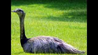 Top Ten Biggest Birds In The World