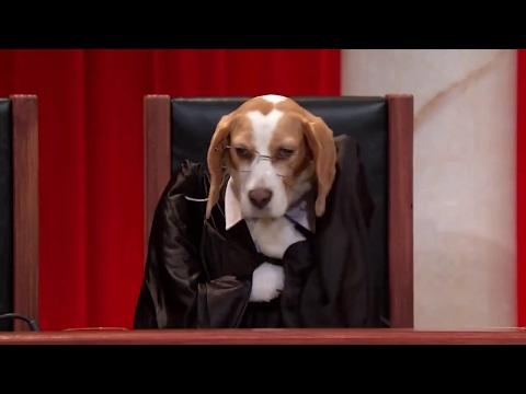 Beckles v. United States: Oral Argument - November 28, 2016
