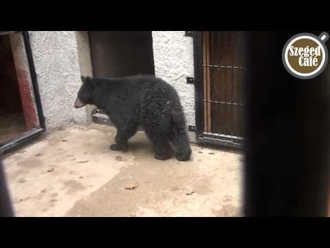 Medvék érkeztek a Szegedi Vadasparkba