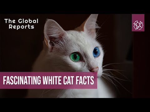 Incredibly Cool And Fascinating White Cat Facts