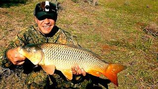 САЗАН АКТИВЕН Укрупняюсь по размеру Жара мошка Ловим сазанов на жмых Рыбалка в Астрахани