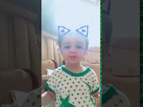 Cutest baby cat funny video