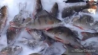 Зимняя рыбалка на Кольском п-ве  2014-15г.