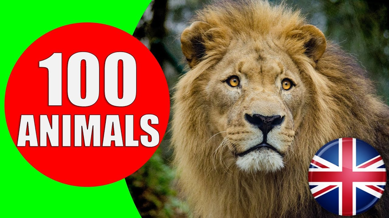 Animals for Kids to Learn - 100 Animals for Kids, Toddlers and Babies in  English | Educational Video - YouTube