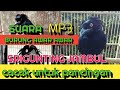 Suara Burung Srigunting Jambul  Mp3 - Mp4 Download