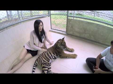 Damnoen Saduak Tiger Zoo - Bangkok - Feiyu Tech G3 Ultra + GoPro Hero4 Silver