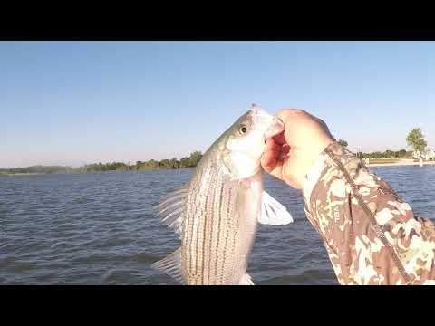Striper Fishing Lake Whitney