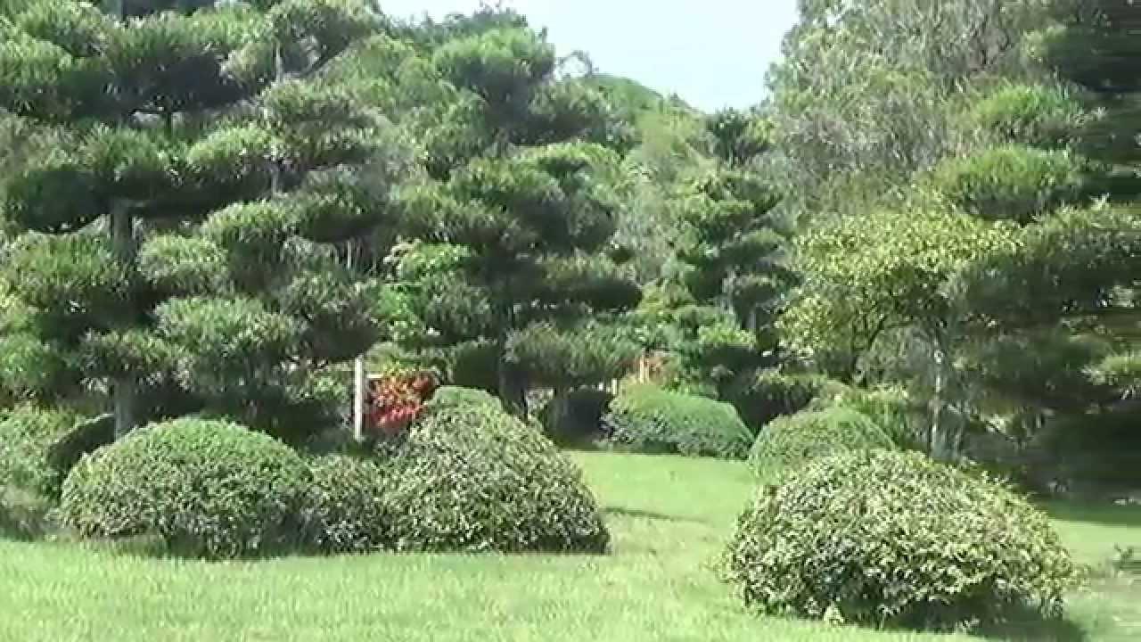 Jardin japones jardin botanico de la republica dominicana for Al jardin de la republica acordes