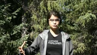 Cheminement des cours à la MGDEF - par Caroline