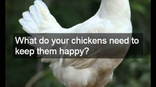 Choice Of Chicken Coops Building Plans | Easy Step By Step Chicken Coops Building Plans & Designs