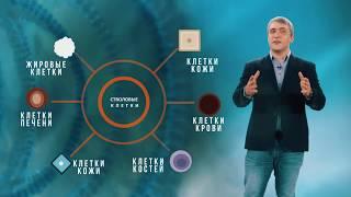 Наука за минуту_Стволовые клетки