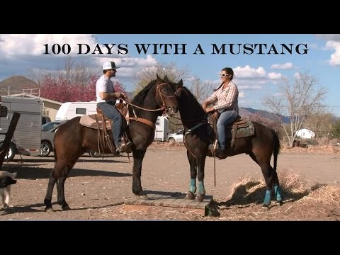 100 Days with a Mustang