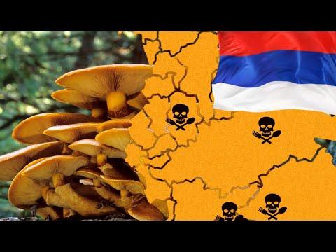 Топ 10 самых ядовитых грибов в России