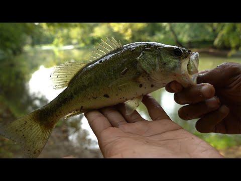 Ultralight Fishing   I Forgot My Tackle Box