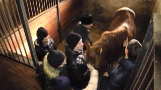 Конный двор «Перстень» — настоящий рай для любителей животных