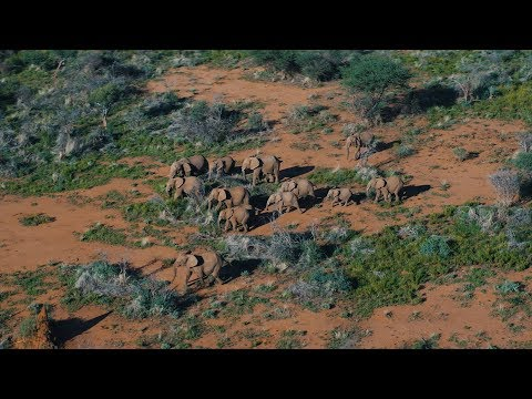 DJI - Kingdom of the Wild - Wildlife in Namibia, Africa