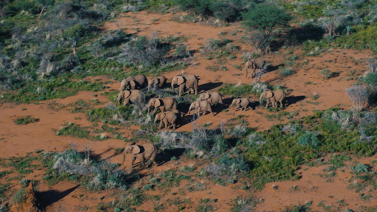 DJI - Kingdom of the Wild - Wildlife in Namibia, Africa - YouTube