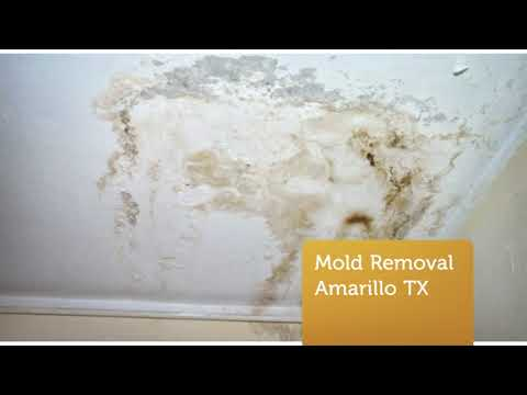 5 STAR Rating for ALL US Mold Removal Service