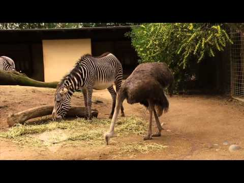 Rob on the Road: Sacramento Zoo - KVIE