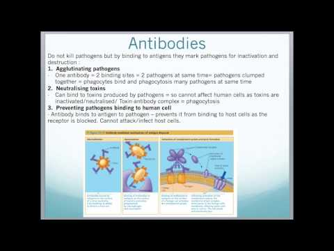 A2 Edexcel Biology Unit 4 - Bacteria, Viruses, Innate/Specific Immunity