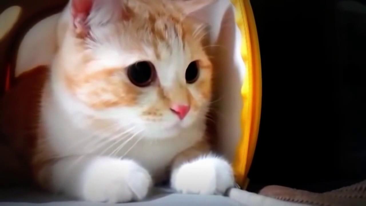 Download 99+  Gambar Kucing Lucu Ngakak Paling Lucu Gratis