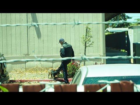 East Palo Alto FOIA...cop kicks dog
