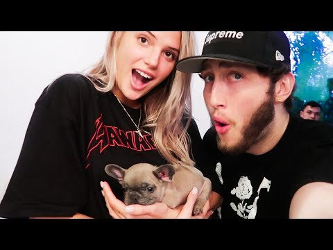 Thumbnail: WE GOT A NEW PUPPY!!