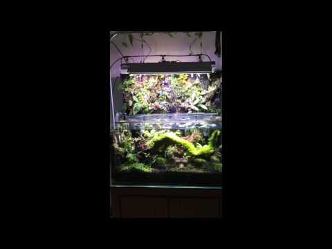 ADA 90-P Tropical Vivarium Update