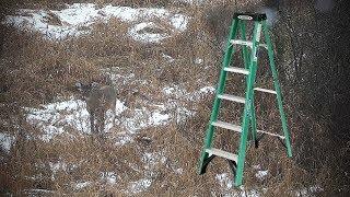 Deer Hunting Strategy - Step Ladder
