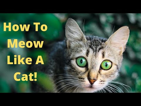 How to Meow Like a Cat!