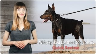 Wide Spiked Leather Dog Collars - 'top Paw Style' & 'gladiator' - Review