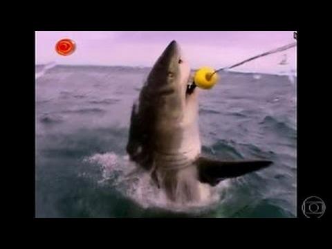 Luciano Huck mostra alguns ataques de tubarões no Caldeirão do Huck 0403
