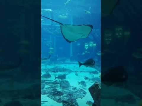 Lost chamber/Biggest Aquarium in the middle east/Atlantis The Palm Dubai