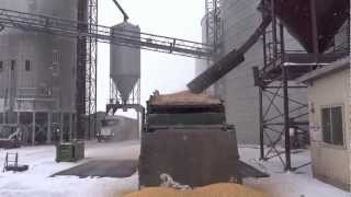 REMOVING FOREIGN MATERIAL (WHITE CAPS AND CORN) FROM WHEAT