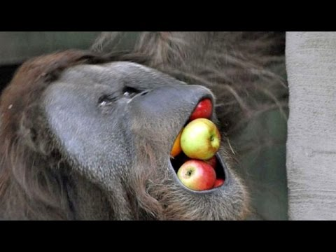 Animal world is by far the funniest world - Funny animal compilation